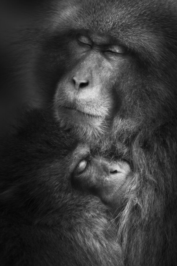 Mother and baby macaque | Japan