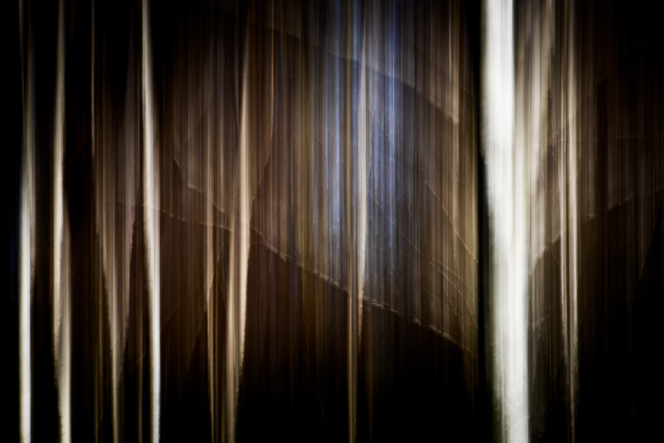 Birch trees, double exposure, ICM