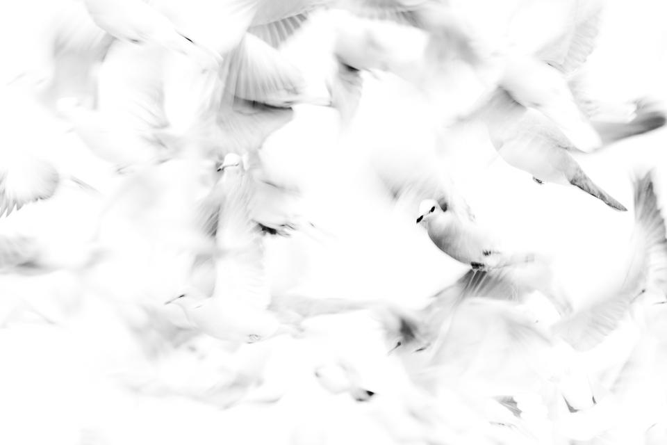 Doves | Kalahari