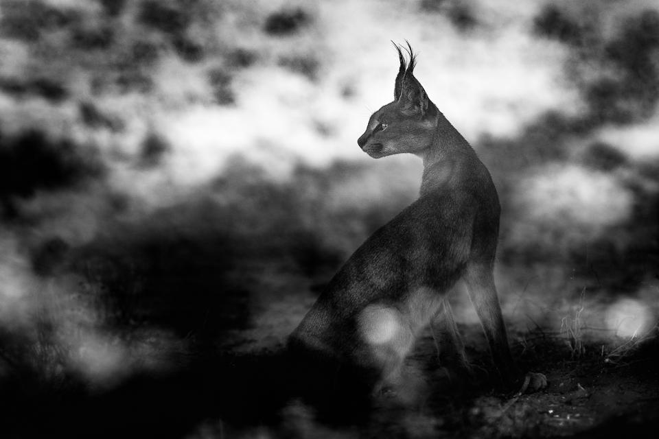 Fotoresa till Kalahari