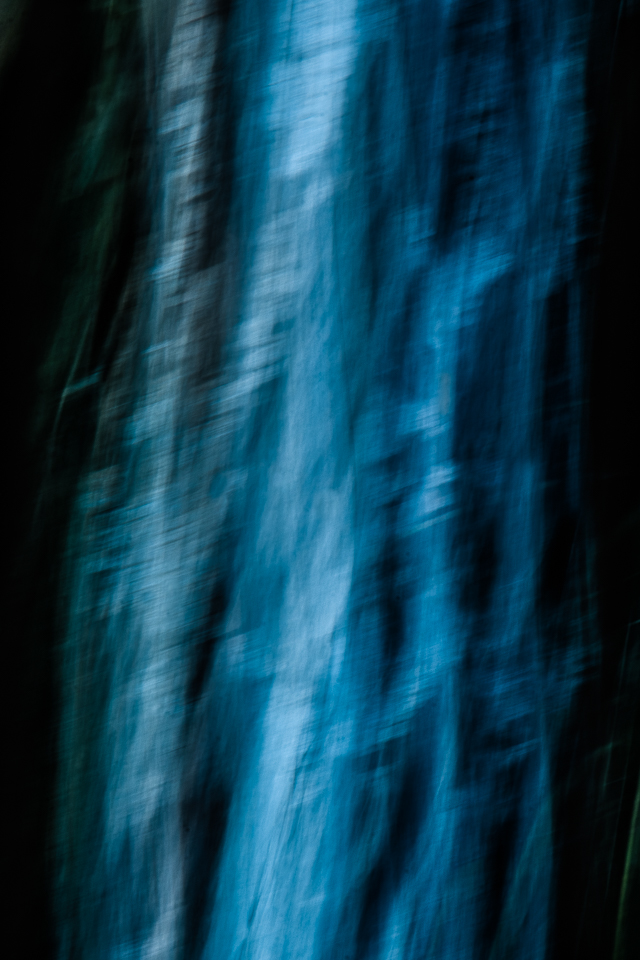Abstract photo of trees